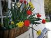 Spring Burlington Flowers 2013 by Heavenly Ryan